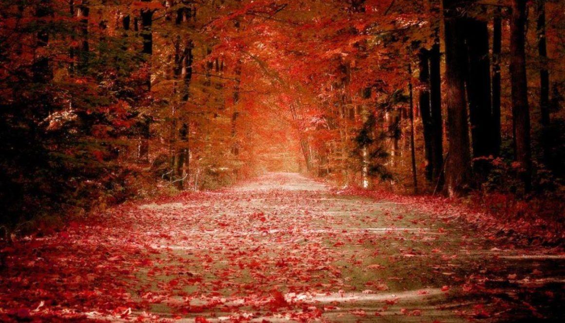 autumn-road-wallpaper