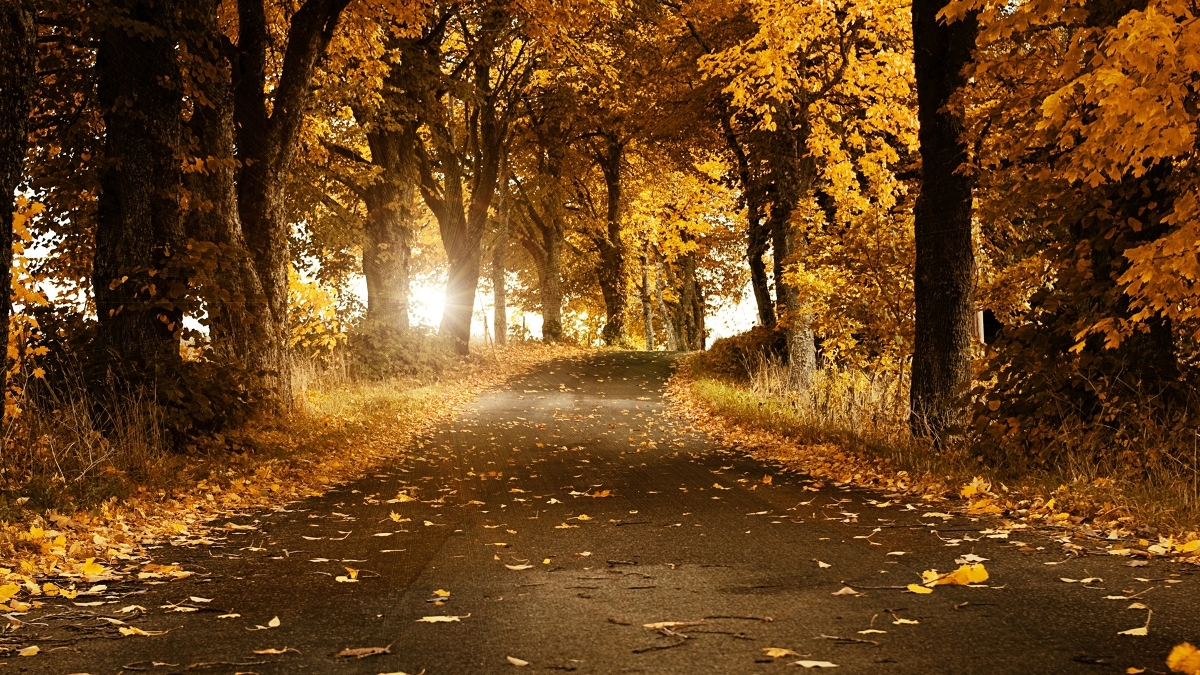 autumn-road-background